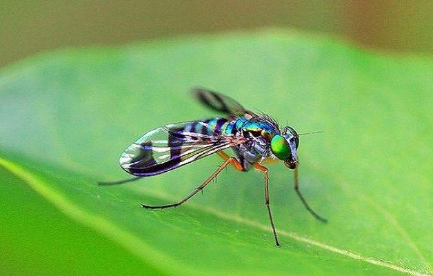 Punture di zanzare 10 rimedi fai da te per alleviarne il - Rimedi contro le zanzare in giardino ...