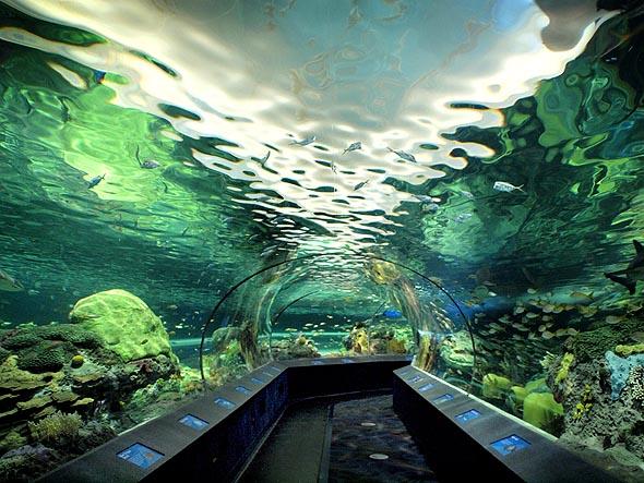 acquario Canada Toronto Acquari