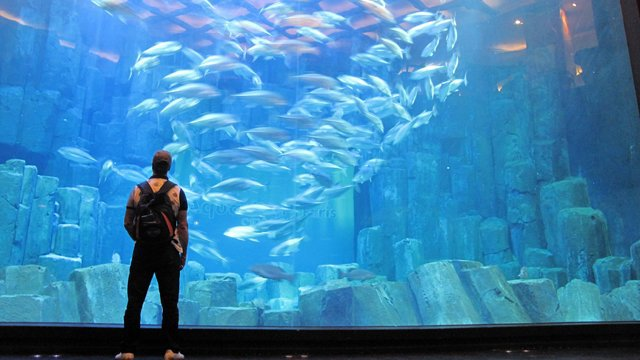 Gli acquari pi piccoli e pi belli del mondo da non perdere for Acquario per tartarughe grandi