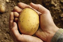 le patate nella dieta