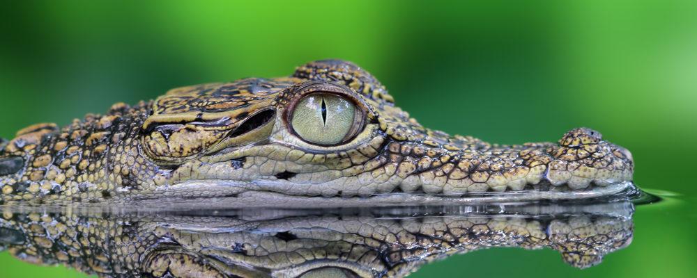 coccodrilli in Italia